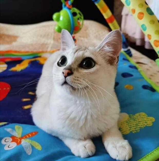 Породы домашних кошек, о которых знают не все