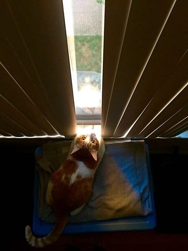 Доброе утро! животные, котики, лучи, погреться, солнечные ванны, солнце, температура, тепло