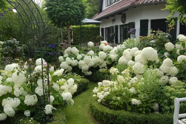 Выбираем белые цветы для создания монохромного сада: подборка лучших сортов