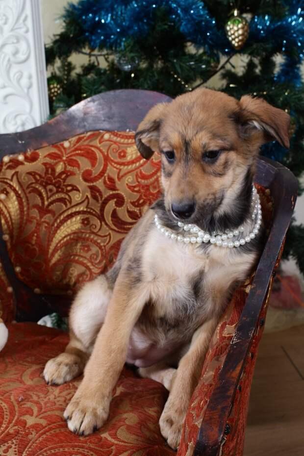Заботливая собака прятала своих щенков от непогоды и людей в заброшенном доме собака, щенок