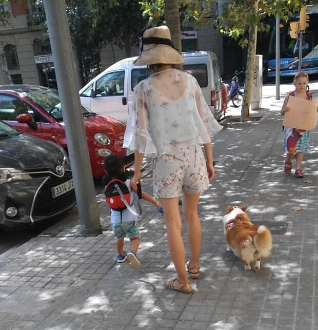 Прогулка без поводка животные, жизнь, мир, роскошь, собака, удобство, фото