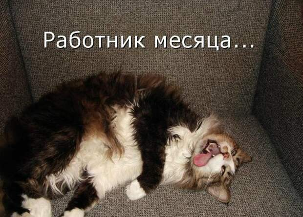 Веселые картинки с надписями для настроения (10 фото)