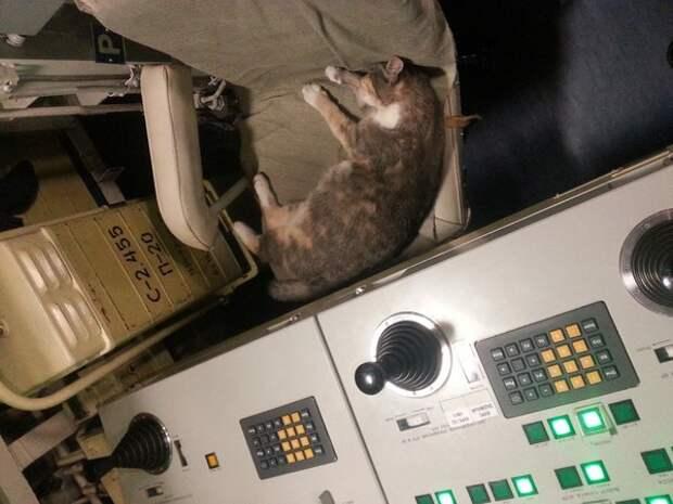 Рожденные на глубине 200 м, эти котята станут новыми талисманам ВМФ России