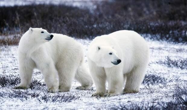 Стартовал второй этап экспедиции «Хозяин Арктики»