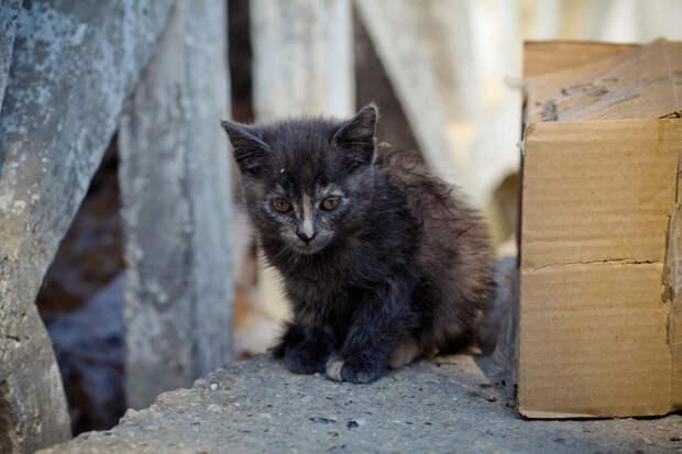12 историй со счастливым концом о том, что случается, когда люди проявляют заботу по отношению к бездомным животным