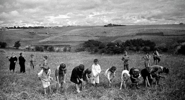 Детский труд в советской деревне- эксплуатация или форма воспитания?