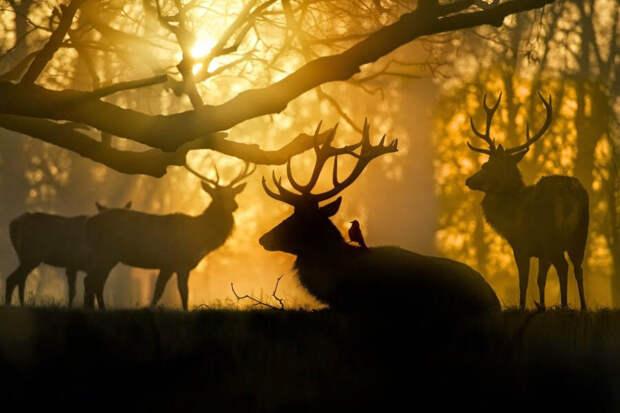 Подборка невероятно красивых фото, которая доказывает, что жизнь прекрасна и удивительна - 1 часть