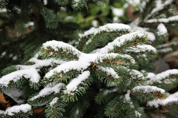 Небольшой снег придет в Удмуртию в четверг