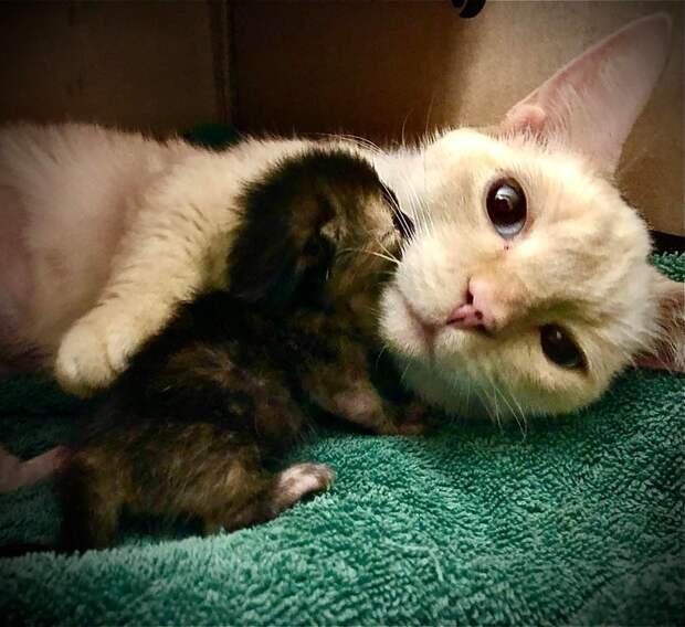 Нет места безопаснее, чем рядом с мамой