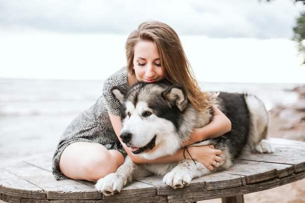 5+ вещей, которые должен знать каждый владелец собаки