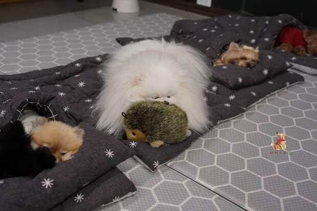 12 очаровательных фото детского садика для собак
