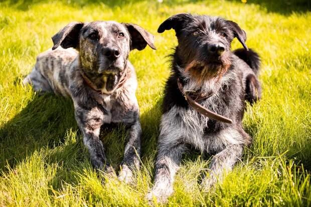 собаки на поляне