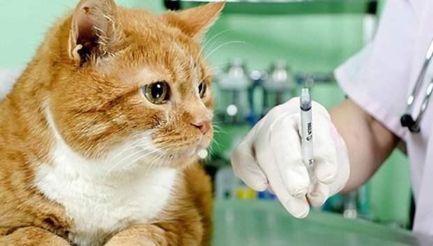 Во вторник жители Подольска смогут привить домашних животных от бешенства