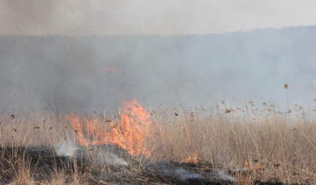 Всвязи спожароопасной обстановкой влесах Тюменской области вводится режим ЧС