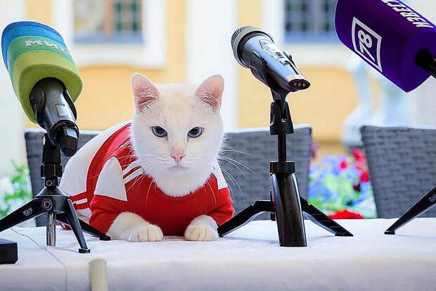 Глухой кот Ахилл станет оракулом матчей Евро-2020 в Петербурге