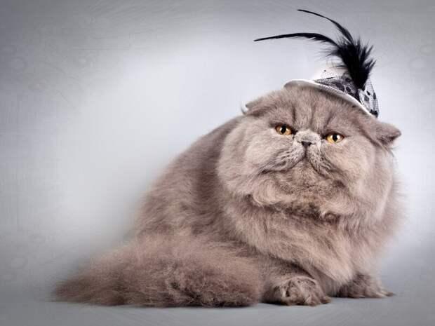 2. Кошка пушистая везде, а не только на голове. жены, интересное, кошки, юмор