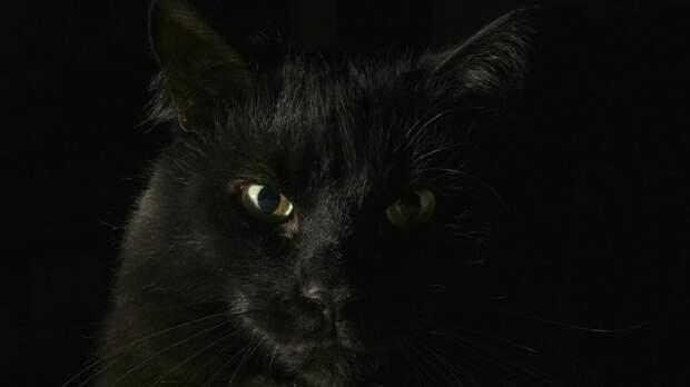 Популярные мифы о кошках разоблачили британские ветеринары