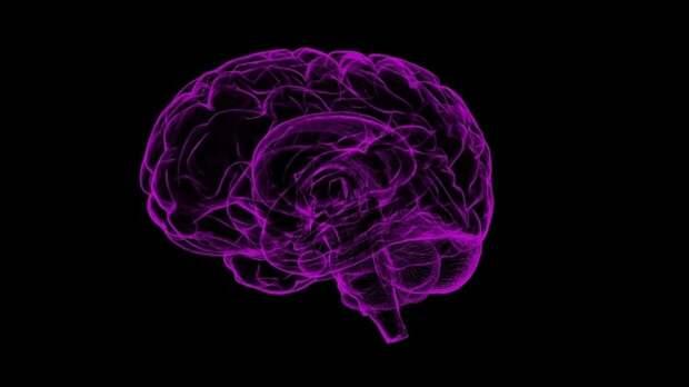 """Нейробиологи разработали сканер для """"стирания"""" памяти"""
