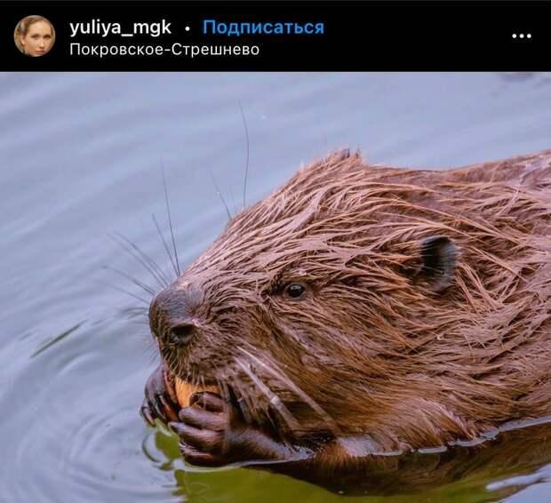 Фото дня: речного строителя из парка «Покровское-Стрешнево» застали за перекусом
