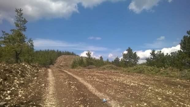 ФАН разобрался в ситуации с вырубкой деревьев наАй-Петри ради стройки новой дороги