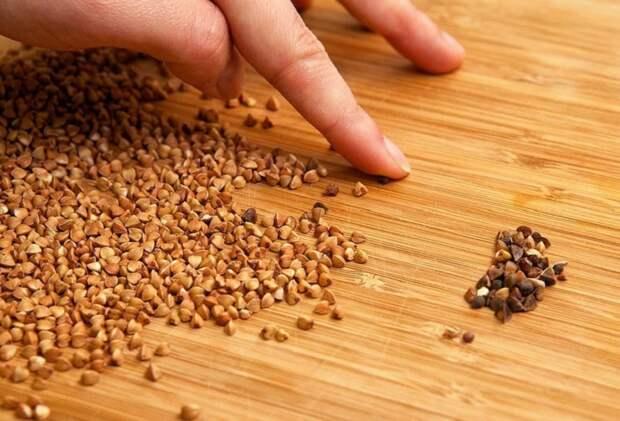 Контроль качества семян