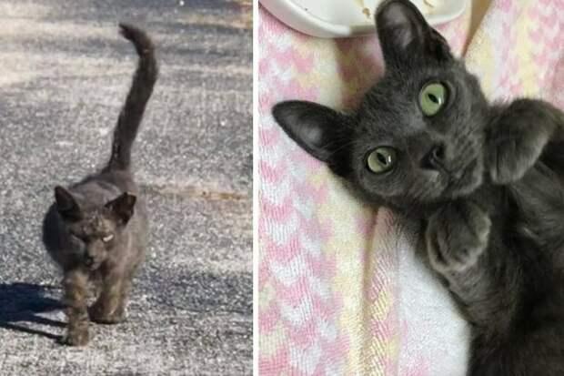 Страшненькая кошка с большим животом превратилась в настоящую красавицу