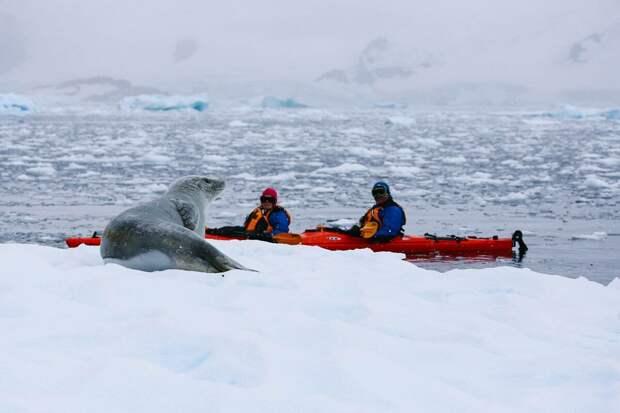 Кто на самом деле прогнал американский флот из Антарктиды?