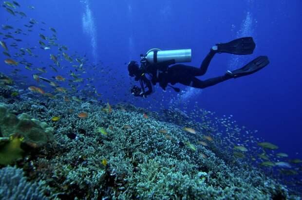 5 лучших мест для дайвинга. Гид по красоте подводного мира