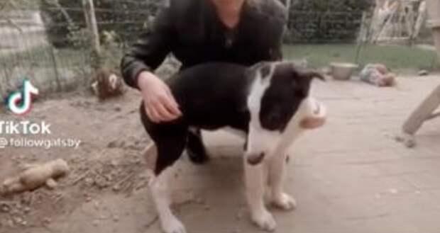 Блогер захотела большую собаку и скрестила породы
