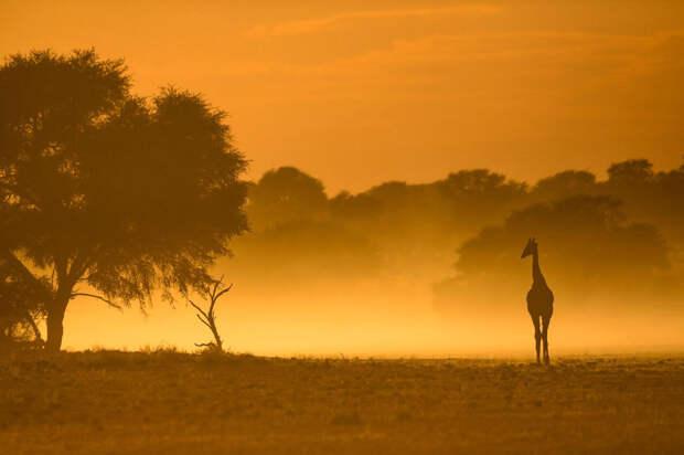Неповторимая Африка