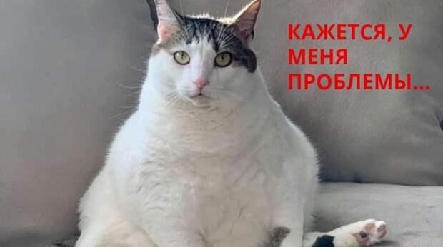 Из-за ожирения у кошки возникла «неприличная» проблема. Врач решил её, но никто не думал, что это будет так смешно