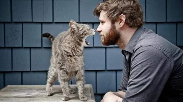 Почему кошка шипит на человека: пять возможных причин
