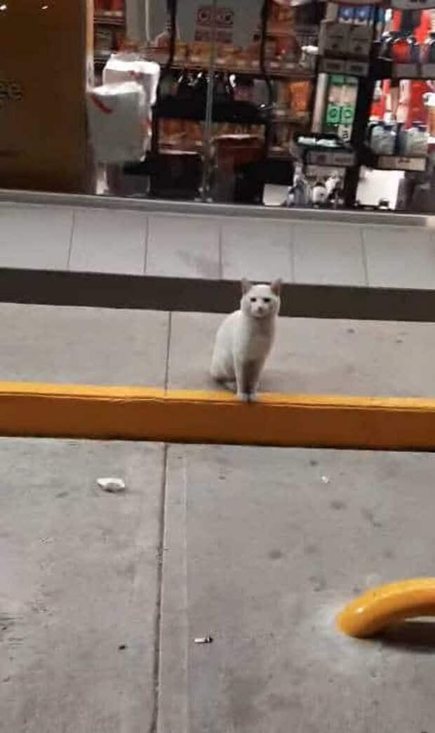 Одинокий белый кот каждый день приходил к магазину, садился у входа и чего-то ждал