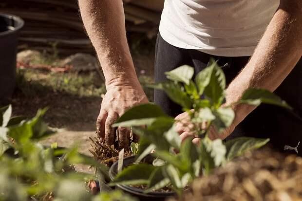 Рассказываю как помочь рукам после работы в огороде