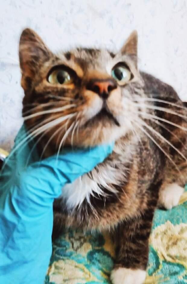 Пожалуйста, отзовитесь, кто готов приютить бывшедомашнюю кошечку хотя бы на время!