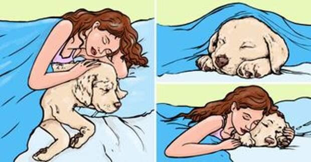 10 заблуждений о домашних животных, в которые многие верили долгие годы