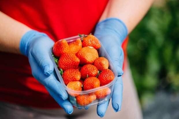 В 2020 году в Крыму собрали более 123 тысяч тонн плодов и ягод