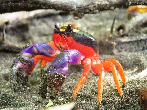 Природа - лучший художник: 40 животных неожиданной расцветки - 17