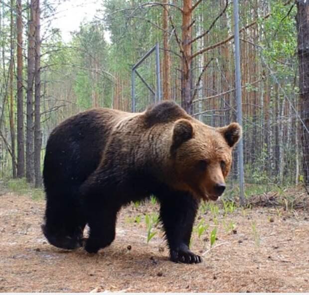 МОК запретил русского медведя