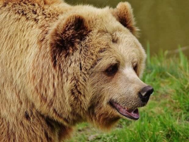 Сбежавшего в Мытищах медведя заметили в Пушкинском районе