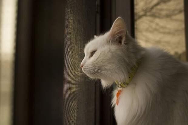 Роскошного белого кота выставили на мороз белый кот, кот, кошка