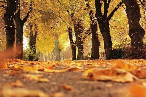 В четверг в Удмуртии ожидается до 16 градусов тепла
