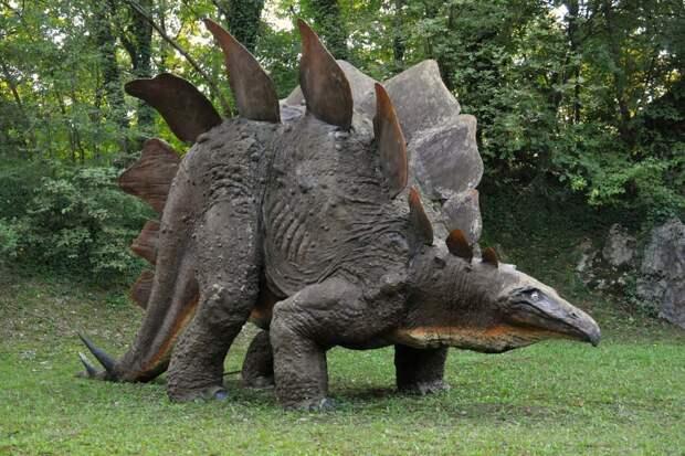 Учёные выяснили, что якутские стегозавры не имели кариеса из-за частой смены зубов