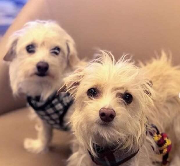 Одетые собаки