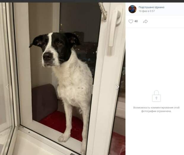 Замерзшего пса на улице Народного Ополчения спасли прохожие