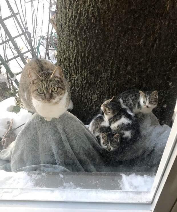 Они спасли в мороз двух котят, а через год и их маму...