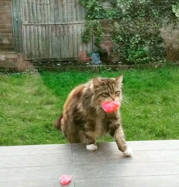 Дружелюбная кошка начала приносить цветы своим соседям
