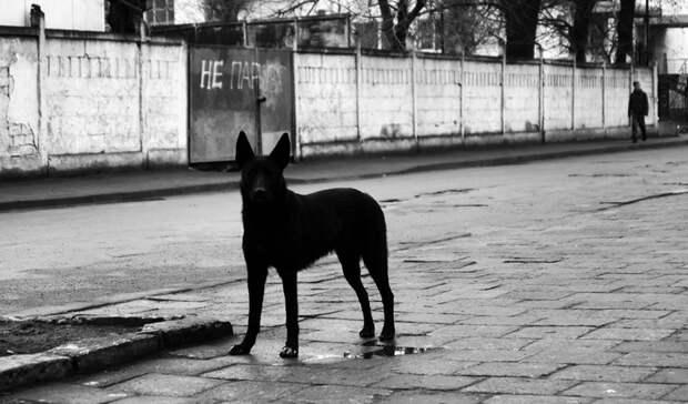 «Всё время боишься»: агрессивные обитатели улиц беспокоят приморцев