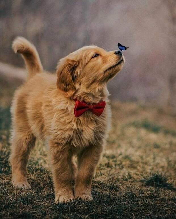 Снимок маленького щеночка и бабочки у него на носу вдохновил пользователей сети на фотошоп-баттл бабочка, баттл, милота, пес, подборка, собака, фотошоп