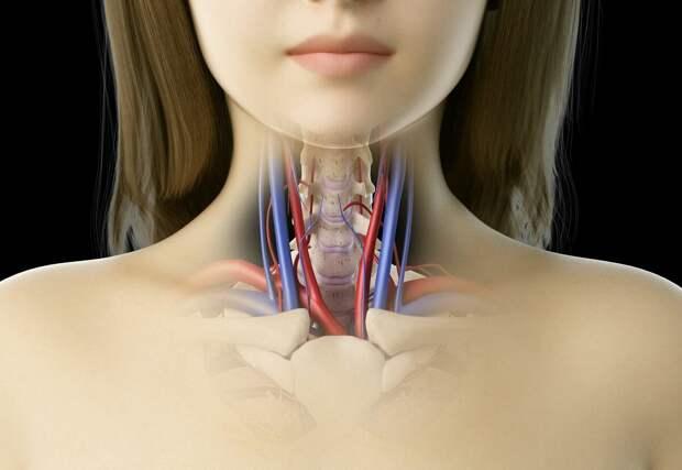 УЗИ сонных артерий - безопасный метод исследования